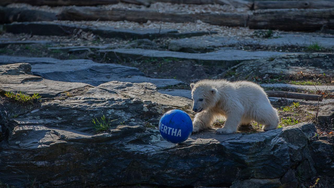 Ein Eisbär namens Hertha